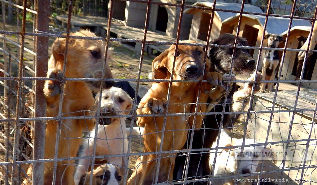 Campanie de informare pentru proprietarii de câini din Hunedoara