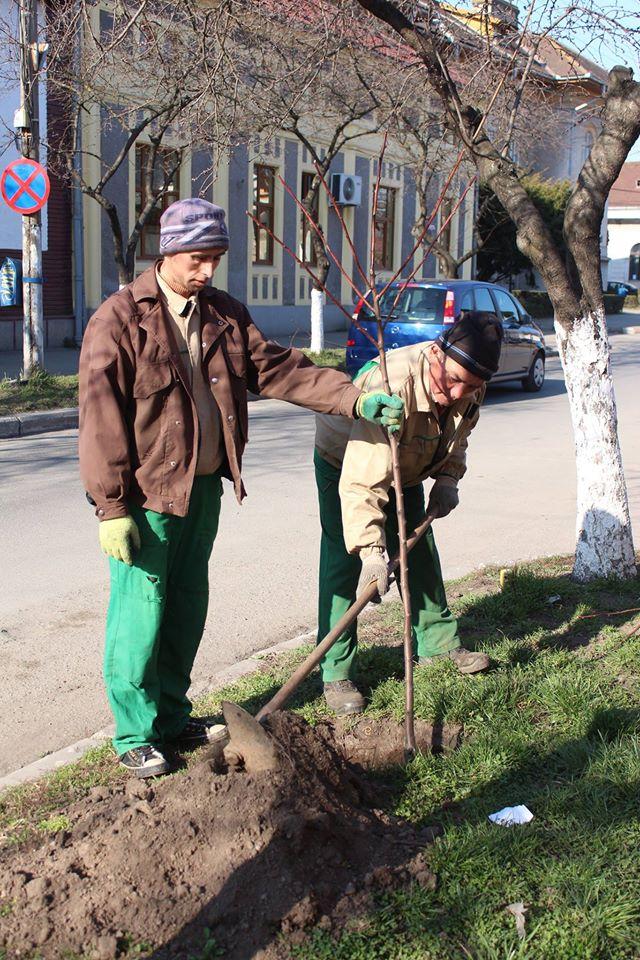 Plantări de primăvară în Hunedoara