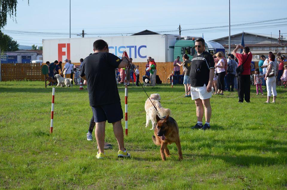 La Deva s-a deschis primul Dog Park din judeţ