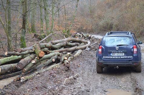 Sancţiune pentru depozitare ilegală de resturi de material lemnos, aplicată de jandarmii montani din cadrul Postului Vaţa de Jos