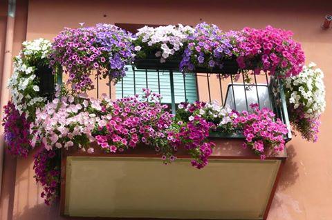 Devenii pot vota cele mai frumoase grădini şi balcoane cu flori din oraş