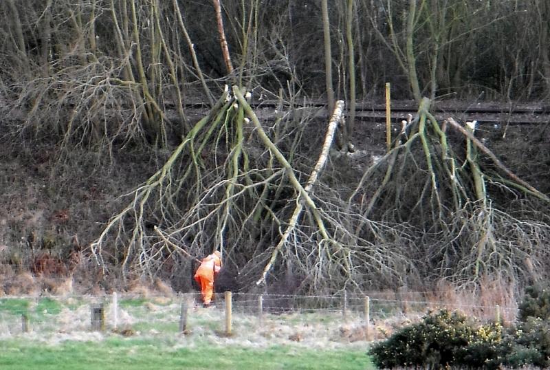 Bărbat din Lăpugiu de Jos, cercetat pentru că a tăiat ilegal cinci arbori