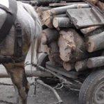 Acţiune a poliţiştilor hunedoreni, pentru prevenirea și combaterea faptelor ilegale din domeniul forestier