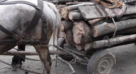 Doi minori din Suseni s-au ales cu dosare penale pentru furt de material lemnos