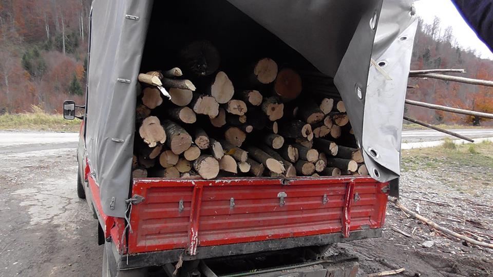 Amendă de 6.000 lei aplicată de polițiștii din Orăștie unui șofer care transpota material lemnos, fără documente legale