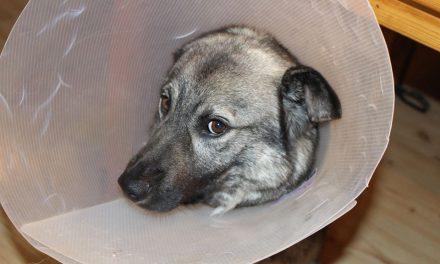 Campanie de sterilizare gratuită pentru câinii fără stăpâni, în Hunedoara